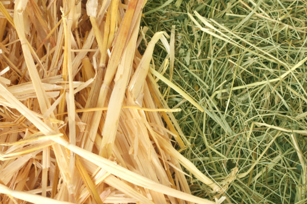 Golden hay and straw texture background close-up